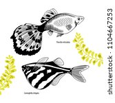 set with  two aquarium fishes. ... | Shutterstock .eps vector #1104667253