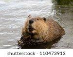 Busy As A Beaver