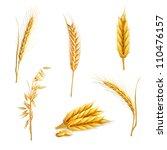 Wheat  Vector Set