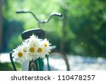 Bouquet Of White Chamomiles On...