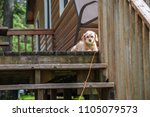 puppy dog laying on porch... | Shutterstock . vector #1105079573