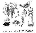 black pepper drawing set.... | Shutterstock . vector #1105134983