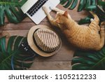 domestic ginger cat acts as... | Shutterstock . vector #1105212233