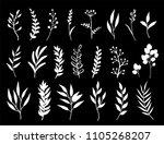 hand drawn set of white herbs ... | Shutterstock .eps vector #1105268207