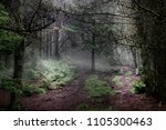 Small photo of Misty clearing in the woods. Enchanted forrest.