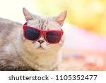 portrait of cat wearing...   Shutterstock . vector #1105352477
