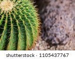 the cactus's sharp thorn is the ... | Shutterstock . vector #1105437767