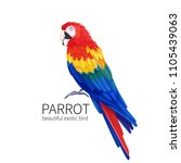 vector parrot. exotic tropical... | Shutterstock .eps vector #1105439063