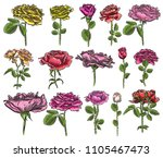 set of isolated roses branches... | Shutterstock .eps vector #1105467473
