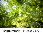 abstract blur green natural for ... | Shutterstock . vector #1105559177
