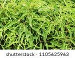 Small photo of Shrub green Shrub