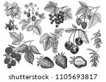 berries big set. realistic... | Shutterstock .eps vector #1105693817