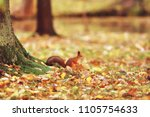Small photo of squirrel in autumn / autumn portrait of squirrel, yellow park with fallen leaves, concept autumn nature preparation for winter, redhead little beast in the forest