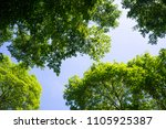 beautiful forest tree leaves in ... | Shutterstock . vector #1105925387