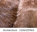 the fur background and texture.    Shutterstock . vector #1106105963