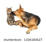 Stock photo adorable cat and dog on white background animal friendship 1106183627