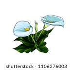 stylish white calla lily flower ... | Shutterstock .eps vector #1106276003