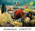 Colorful Marine Life Underwate...