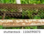 old rusty iron bed in the garden | Shutterstock . vector #1106590073