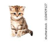 kitten isolated on a white... | Shutterstock . vector #1106929127
