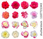collage of colorful roses in... | Shutterstock . vector #1107721343