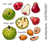 tropical fruits vector...   Shutterstock .eps vector #1107901007