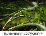macro ground in the garden with ... | Shutterstock . vector #1107928547