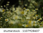 warm light chamomile flower... | Shutterstock . vector #1107928607