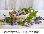 the petals of a blooming lupine.... | Shutterstock . vector #1107951503