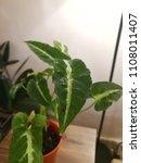 selected focus of dark spot on... | Shutterstock . vector #1108011407