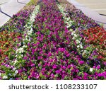 big flowerbed with many tulips... | Shutterstock . vector #1108233107
