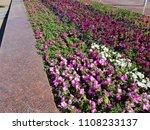 landscape view of a beautiful... | Shutterstock . vector #1108233137