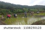 rice farmer  mae la noi  mae... | Shutterstock . vector #1108250123
