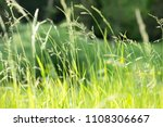 spring or summer with grass...   Shutterstock . vector #1108306667