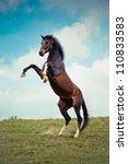 Beautiful Bay Stallion Standin...