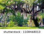 mossy oak tree   slidell ... | Shutterstock . vector #1108468013