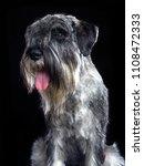 mittelschnauzer dog  isolated ... | Shutterstock . vector #1108472333