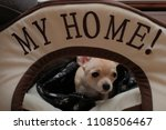Small photo of Small beige chihuahua sitting in her home dog house, text my home