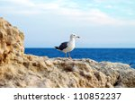 Seagull On Stone On Sea