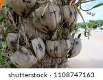 Grow Plant In Coconut Shell. ...