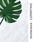 dark green monstera leaf on...   Shutterstock . vector #1109007443