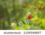 tulips on the flowerbed in... | Shutterstock . vector #1109048897