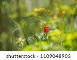 tulips on the flowerbed in... | Shutterstock . vector #1109048903