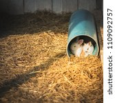 Small photo of Cute fluffy rabbits in a tube