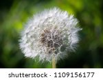 close up of a cap of white... | Shutterstock . vector #1109156177