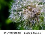 close up of a cap of white... | Shutterstock . vector #1109156183