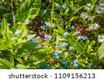 spring little flowers of blue... | Shutterstock . vector #1109156213