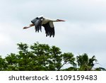 wildlife. white stork in flight ... | Shutterstock . vector #1109159483