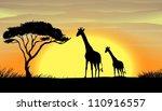 illustration of giraffe in a... | Shutterstock .eps vector #110916557