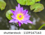 purple lotus flower | Shutterstock . vector #1109167163